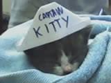Captain Kitty by MrAxiom