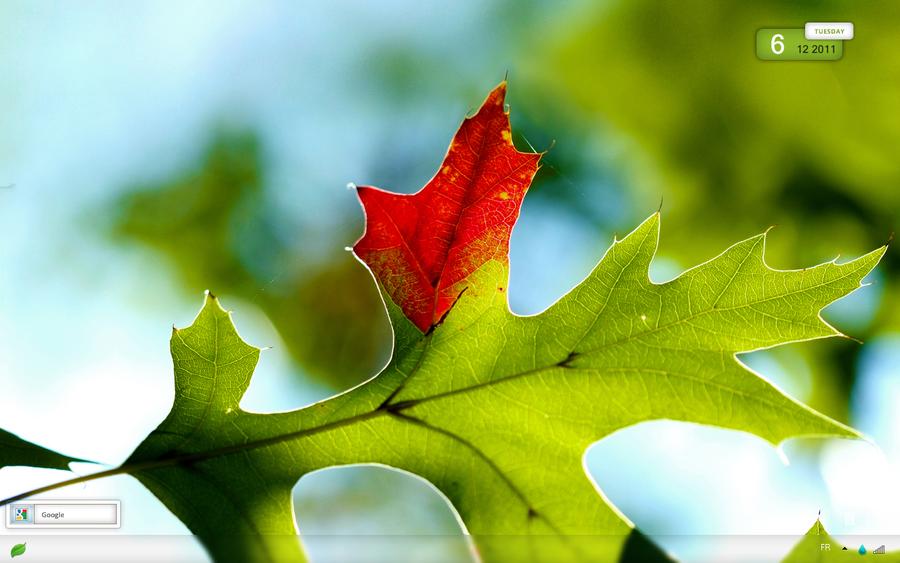 картинки осень макро