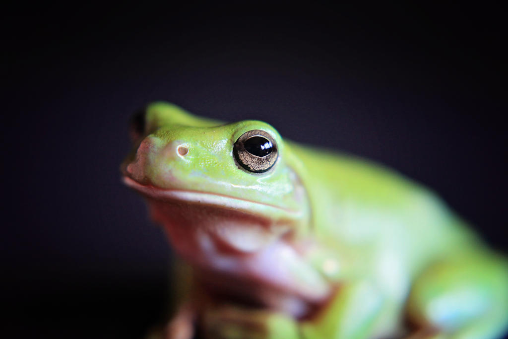 Frog by Zebilmoonunit