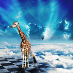 The surreal life of a giraffe