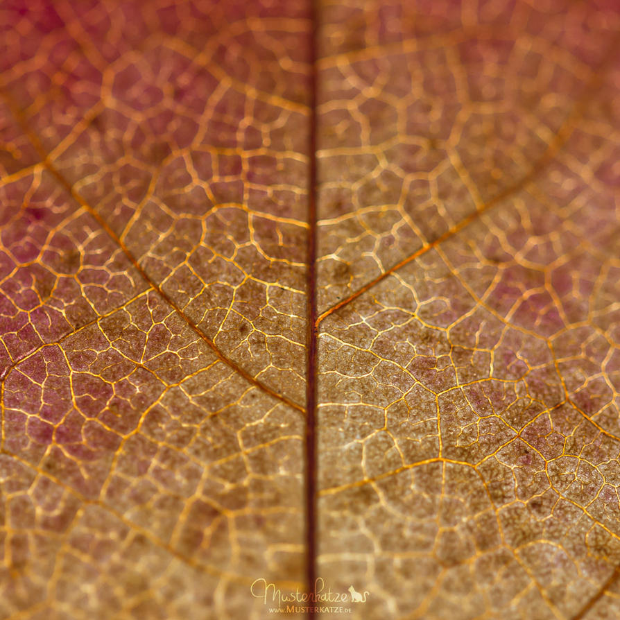 46.52 Autumn leaf by Musterkatze