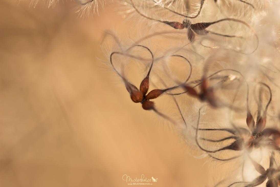 Butterflies by Musterkatze