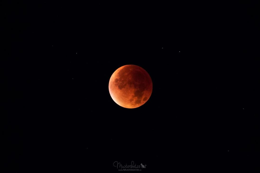 Blood moon by Musterkatze
