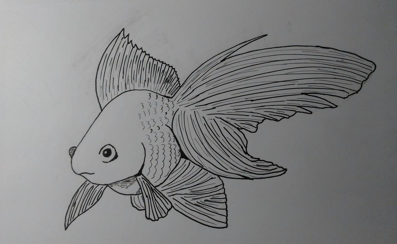 Inktober 2020, Day 1: Fish