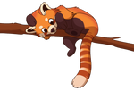 Penn the Red Panda