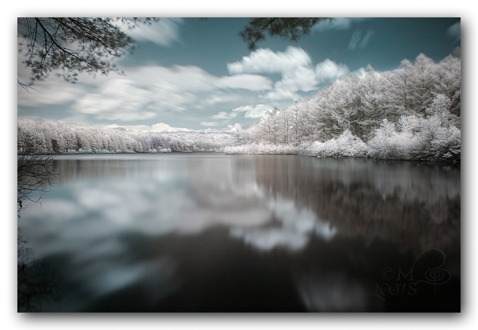 Infrared Reflections by Dracofish