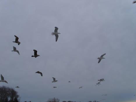 Smilin' Seagulls