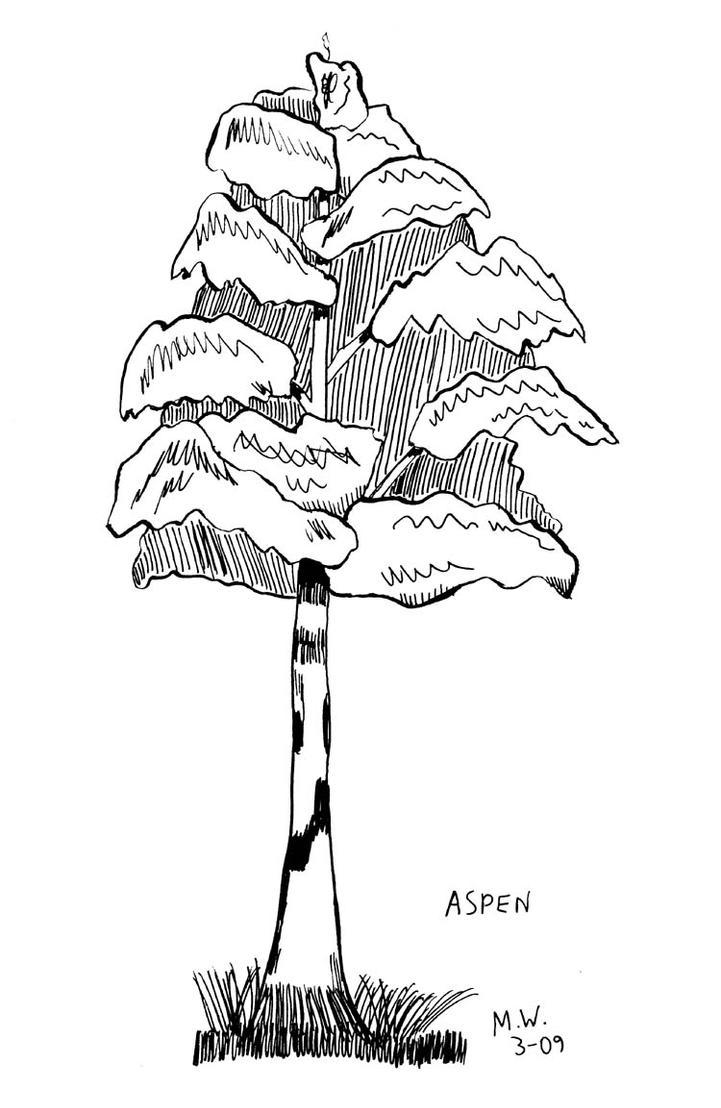 Aspen by Skyfirefox