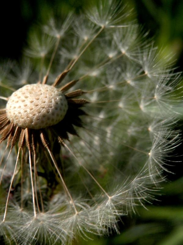 Spring wish by mityrose