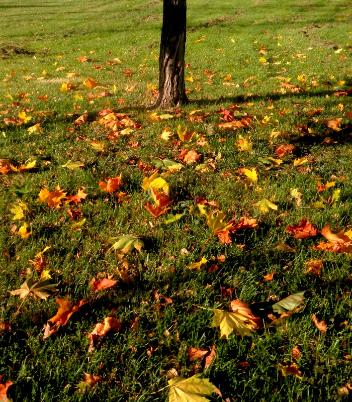 Fallen leaves by mityrose