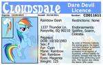 Rainbow Dash's Dare Devil Licence