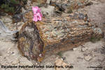 Pinkie Pie visits Escalante Petrified Forest
