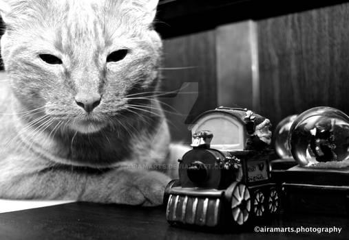 Cat and Miniature Train