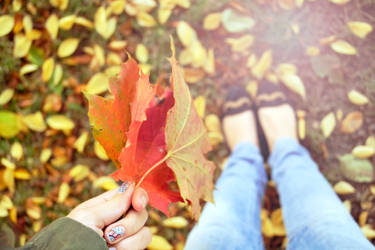 Autumn Leaves by MissMuggle