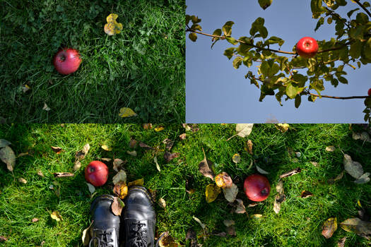 Let's Go Down to the Apple Tree