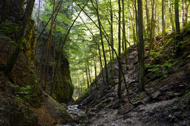 Wooden Gorge by suffer1