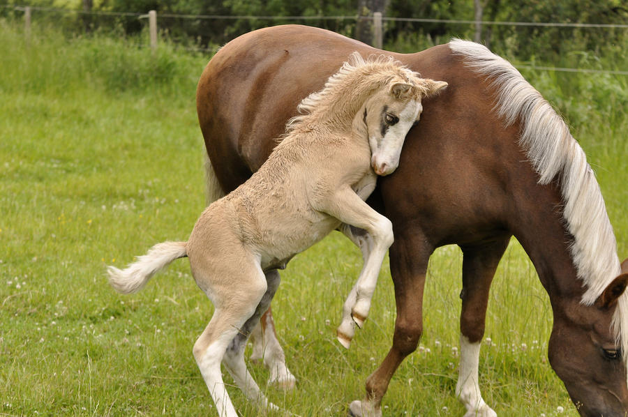 Stella S Foal Daenerys Stormborn Page 15 The Horse Forum