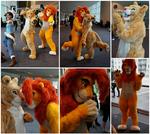Lions at Supanova