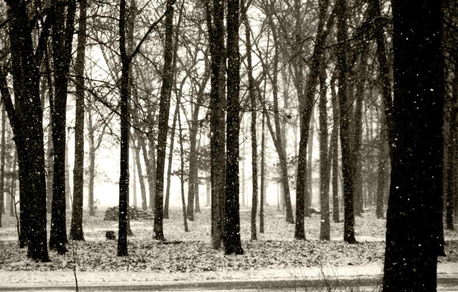 SNOW by katklich