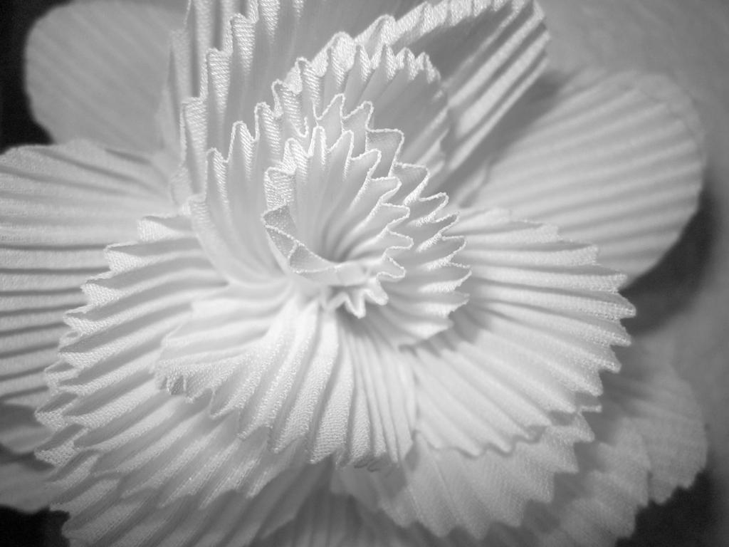 Snow Blossom by Nissa13th