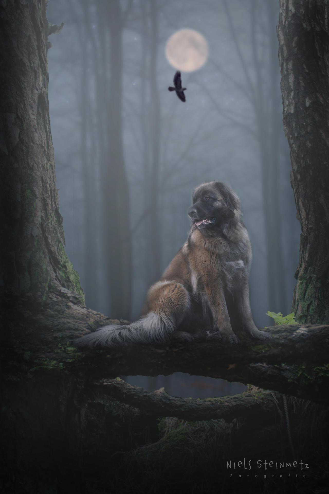 Ceylin woods custodian.2jpg