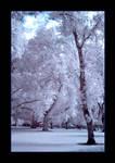 IR Tree 04