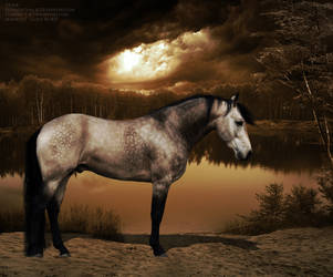 Gorgeous Buckskin by its-kat-yo