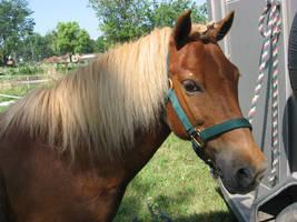 Pony Headshot