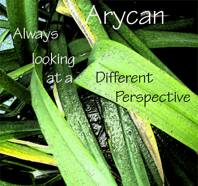 arycan's Profile Picture
