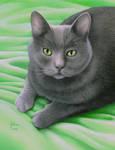Skippy the cat