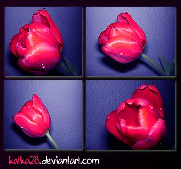 crazy flowers :D by katka28