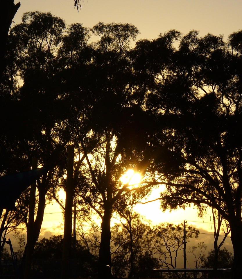 Sun through the trees by IAmMarauder