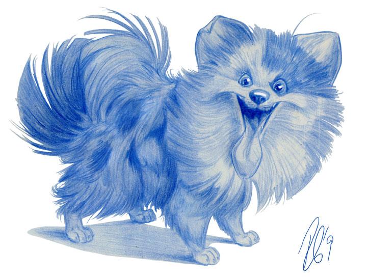 Puffy Pomeranian by SuperStinkWarrior