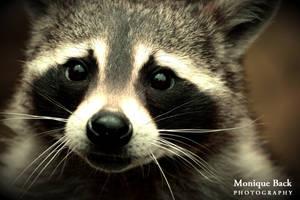 Raccoon Portrait by fucute