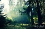 Sun shining at the dark forest