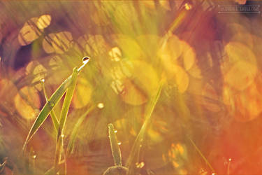 Grass with Dewdrops by fucute