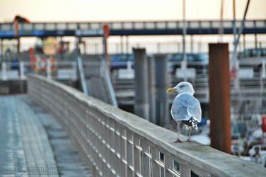 Seagull by fucute