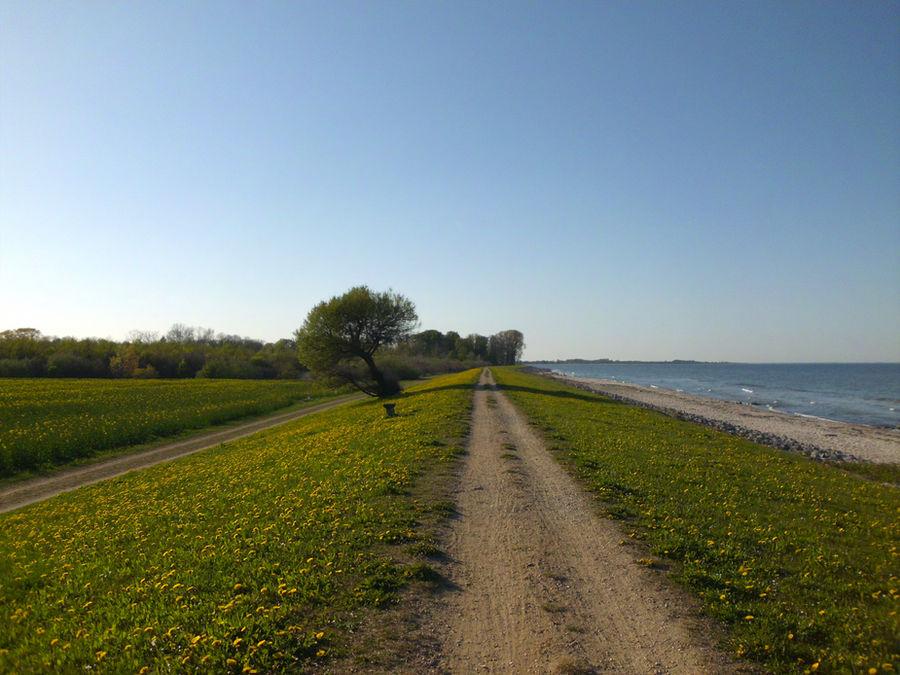 Path by Dreighton