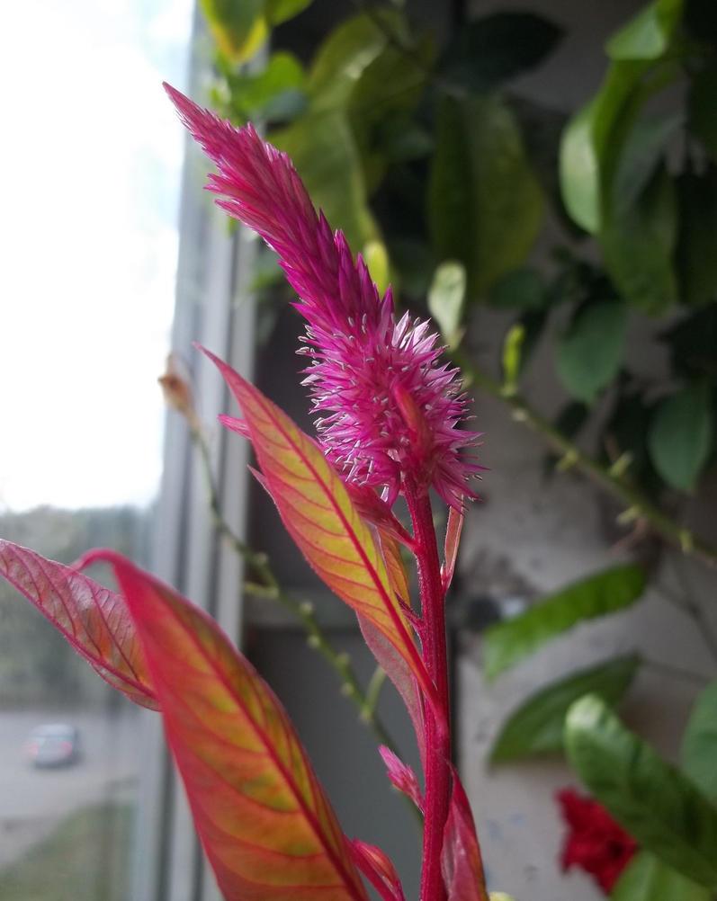 August Flower by TiElGar