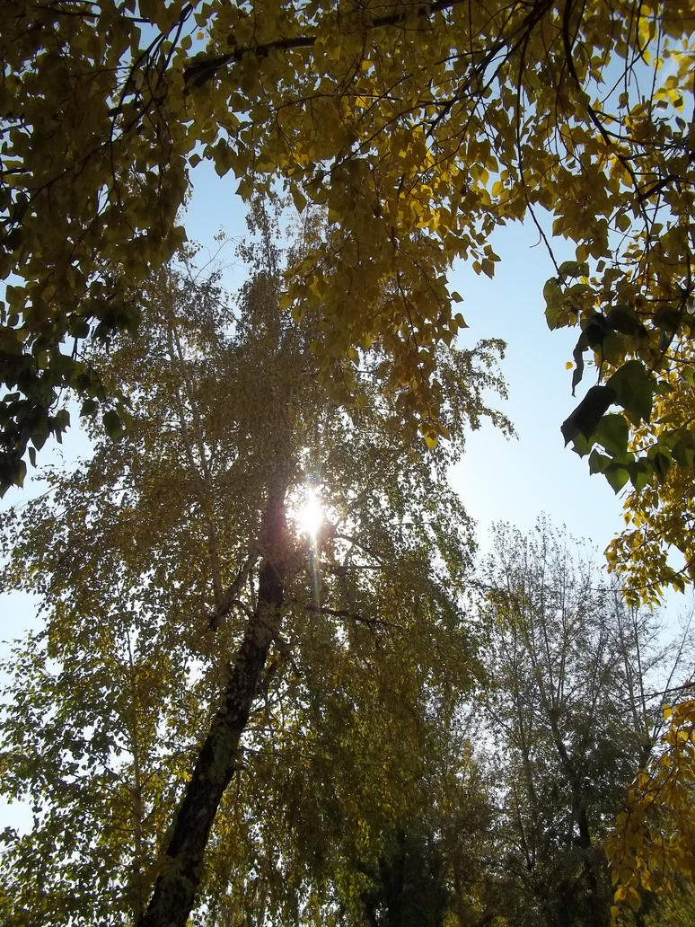 My favorite birch by TiElGar
