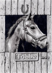 Horse portrait by tjiggotjurring