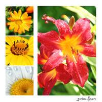 garden flowers by posiekk
