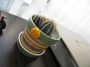 Cactus smilee