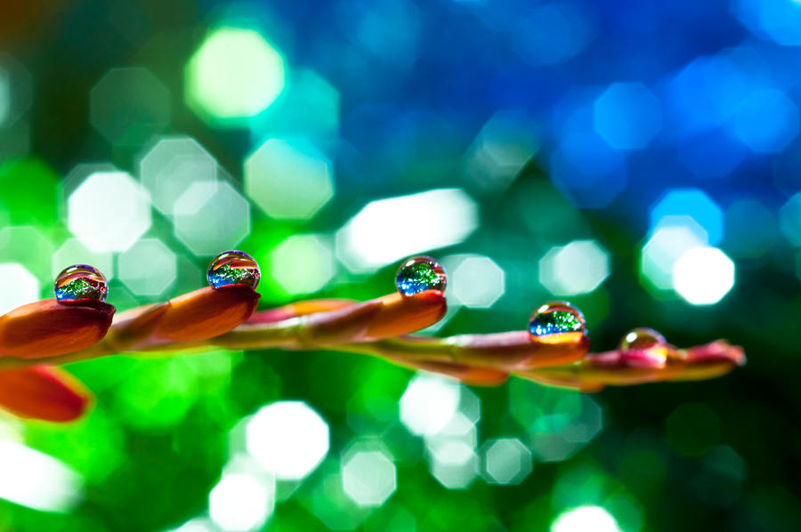 Bokeh wonderland by pqphotography
