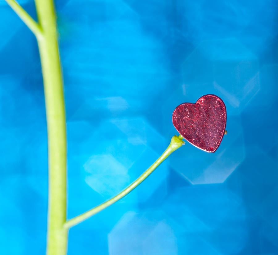 Love grows by pqphotography