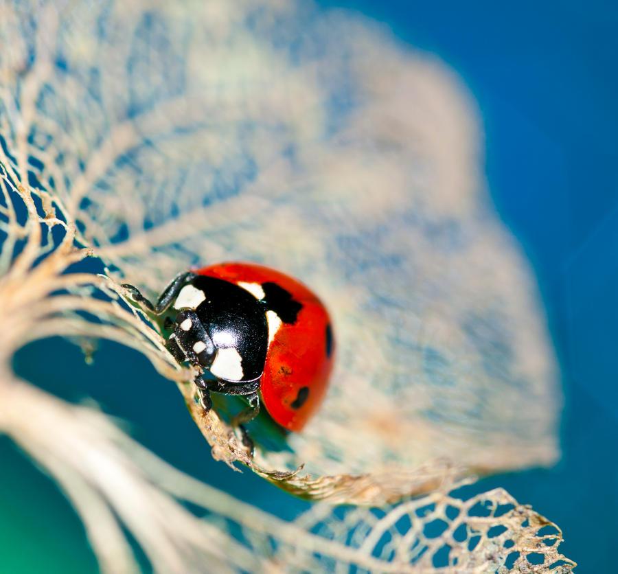 Resting ladybug