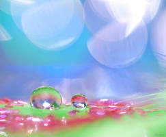 Droplet fever by pqphotography