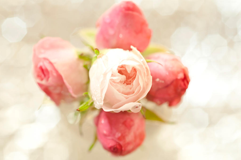 For you all by pqphotography