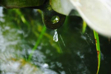 rain. by wacholer
