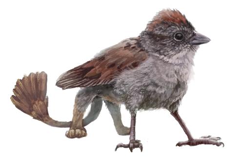 Sparrow Gryphon by Kiarei-star